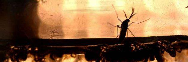 La Martinique enregistre son premier cas de décès lié au Zika