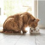 Conseils pour bien nourrir son chat