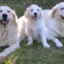 Quelles races de chien choisir avec de jeunes enfants ?
