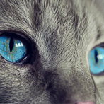 Les chats les plus drôles au monde - Vidéo À Mourir de Rire
