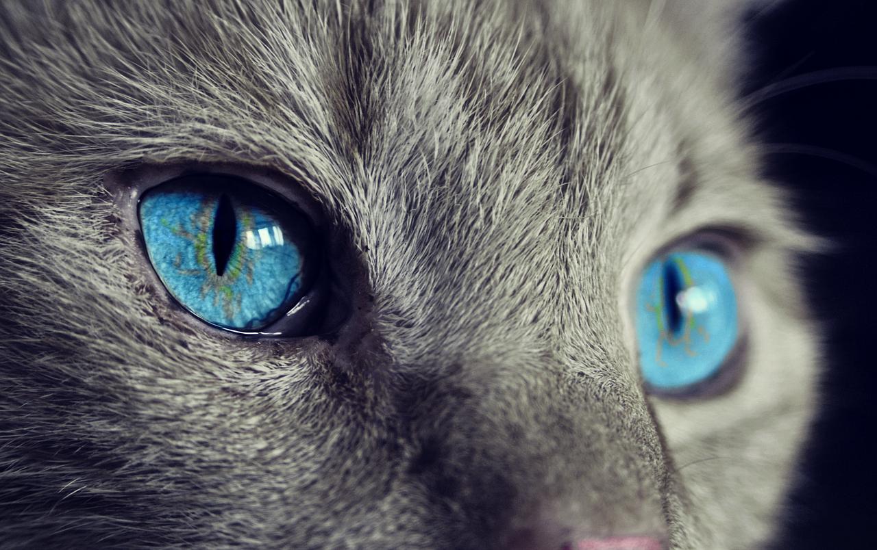 Les chats les plus drôles au monde