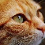 Vidéos de chats à mourir de rire compilation 2020 - Les Meilleures Vidéo du Web