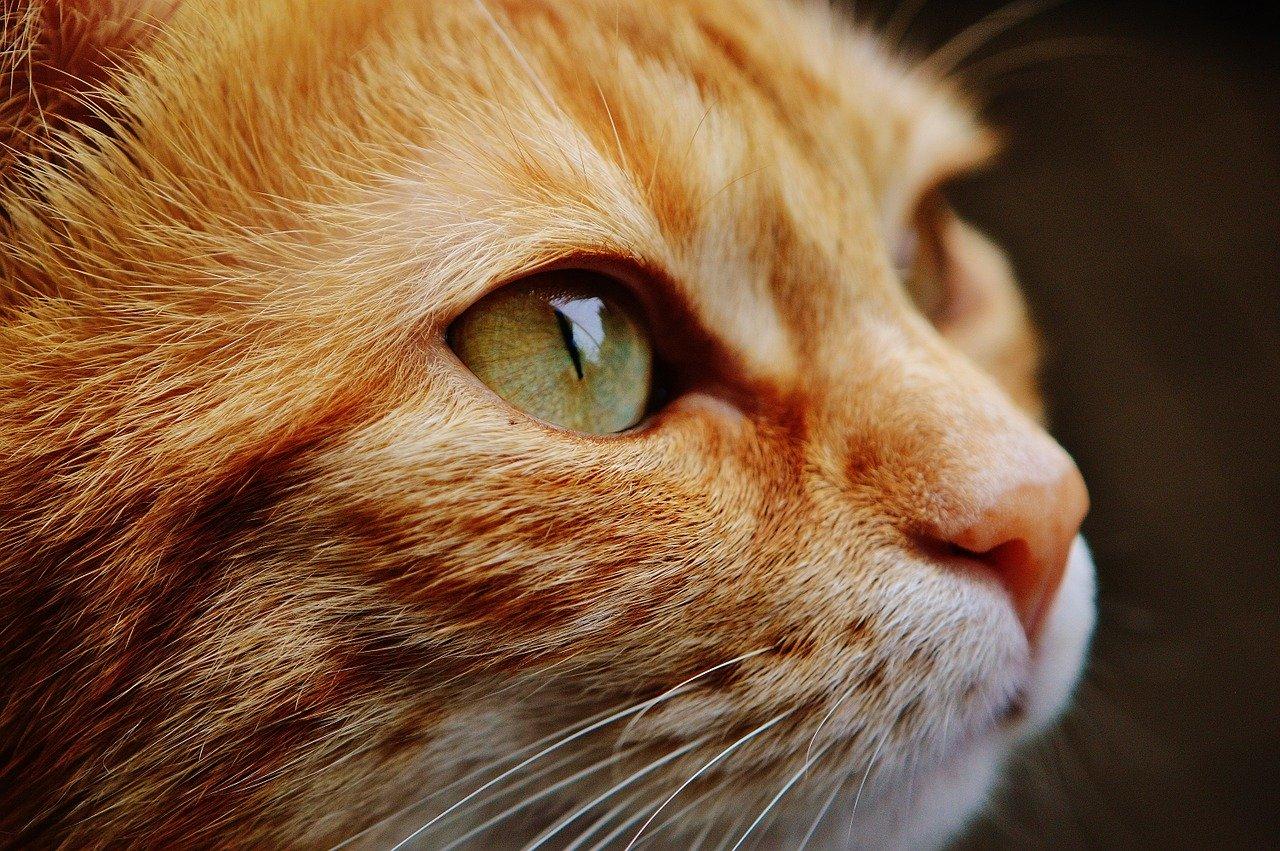 Vidéos de chats à mourir de rire compilation 2020