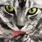 Vidéos de chats à mourir de rire compilation - Les Meilleures Vidéo du Web