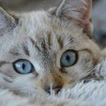 Odeur d'urine de chat incrusté, comment l'enlever?