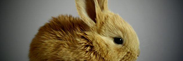 Quels sont meilleurs aliments frais pour lapins ?