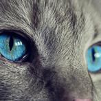 Essayez de ne pas rire spécial chat => Les Meilleures Vidéo du Web