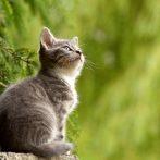 Bêtisier chat trop drôle => Compilation de Vidéo