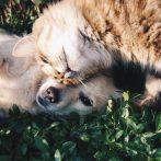 Quand les chats se font des blagues - Vidéo À Mourir de Rire
