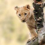 3 merveilleux paysages à visiter en Afrique
