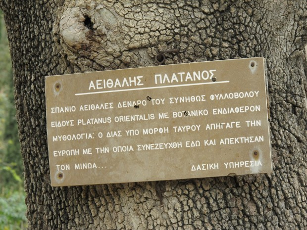 platane-evergreen-Gortyna Mythes et légendes