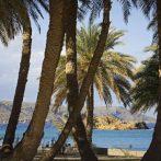 Les palmiers de la plage de Vai et les autres forêts de Phoenix Theophrasti en Crète