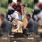 Un chien de police à la retraite sauvé après s'être retrouvé coincé dans un banc de parc