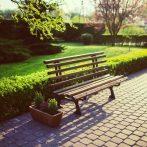 Comment Bien Entretenir les Espaces verts de sa ville tout en respectant l'environnement ?