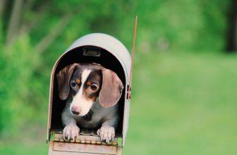 Petit chien allongé dans une boîte aux lettres