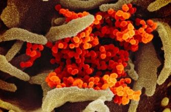 Le marié décède d'un coronavirus, 100 autres personnes infectées après le mariage