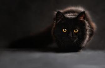 Bêtisier chaton trop drôle – Vidéo À Mourir de Rire