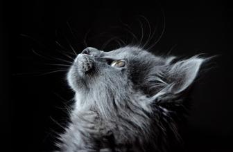 Compilation spéciale chat – Les Meilleures Vidéo du Web