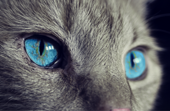 Les chats les plus drôles au monde – Vidéo À Mourir de Rire