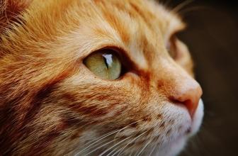 Vidéos de chats à mourir de rire compilation 2020 – Les Meilleures Vidéo du Web