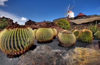 Le Jardin Cactus César Manrique